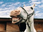 smiling_horse_by_littlezepper116-d588loh.jpg